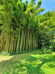 sorgente-bambu-ninfa